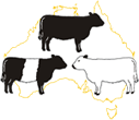 Galloways Australia Inc
